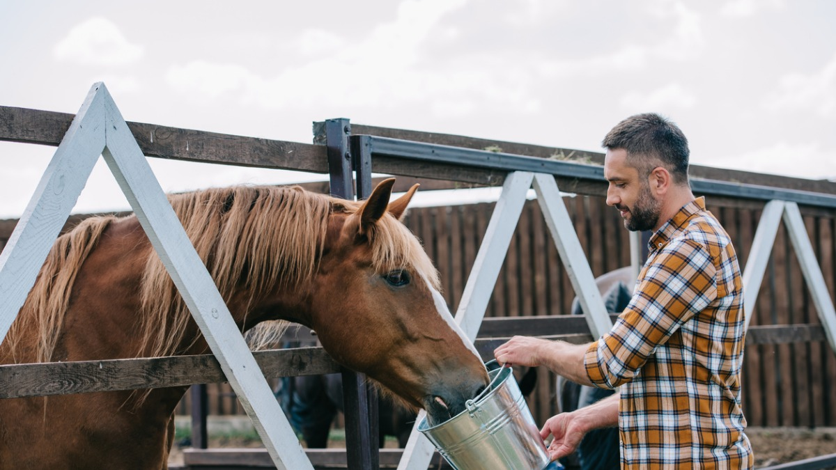Know the best food for old horses for a healthy life